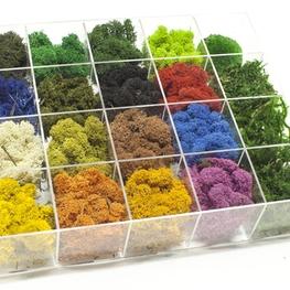 Мох разноцветный