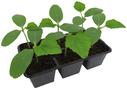 Овощная рассада/Пряные травы
